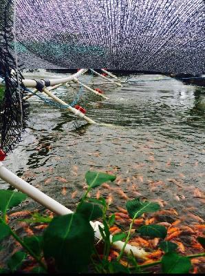 Vendo Finca en Montería apta para piscicultura y agricultura opción de avicultura y porcicultura.