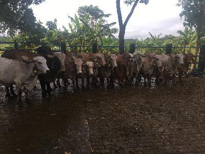 venta de ganado tipo leche