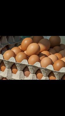 venta de huevo semicriollo