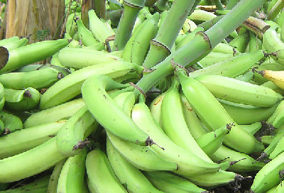 plátano hartón  tipo exportación