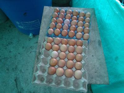 Avicola el Sauce, venta de huevo semicriollo en panal de 30 unidades