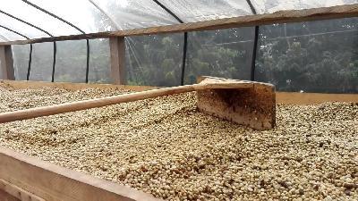 Cafe Alto Aroma, venta de café pergamino seco de alta calidad en kilo
